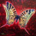 butterfly trap red